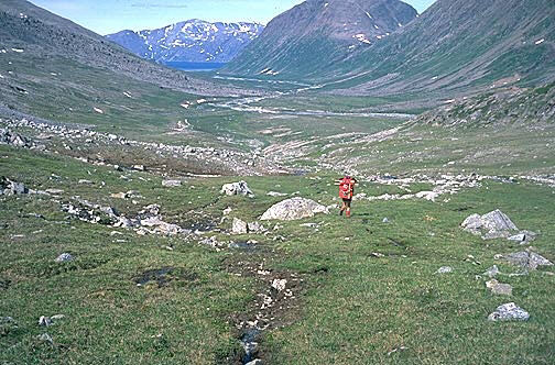 Papa bears torngats information page photo of mccormick valley publicscrutiny Gallery